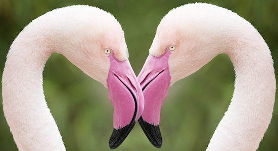 Flamingo Heart, Love